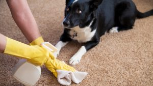 14 Tips for Keeping Your House Clean {With Pets!}13