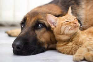 14 Tips for Keeping Your House Clean {With Pets!}6